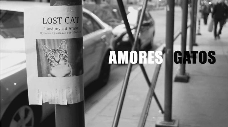 Amores Gatos - Juanma Calderon