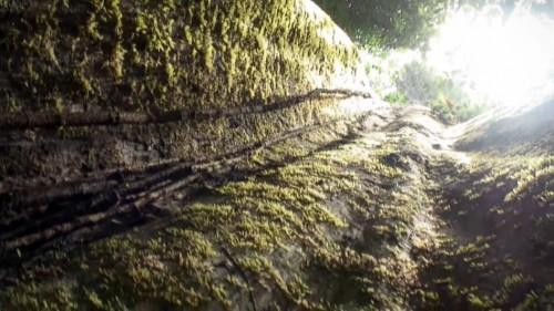 Era un bosque húmedo - Luc Jacquet