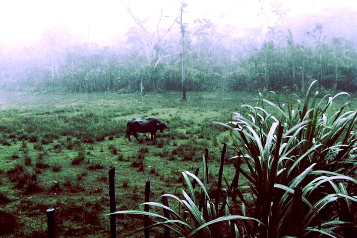 El espacio entre las cosas - selva